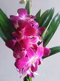 Orchidee dla wazowego przygotowania zdjęcia stock