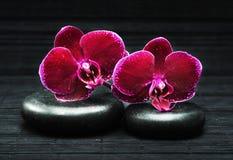 Orchidee e pietre Fotografia Stock