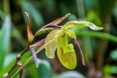 Orchidee in een tuin in Mindo royalty-vrije stock afbeeldingen