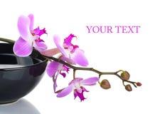 Orchidee in een zwarte kom stock afbeeldingen