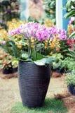 Orchidee in einem Vase stockfotografie