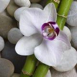 Orchidee en bamboe royalty-vrije stock afbeeldingen