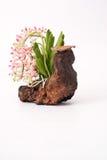 Orchidee en hout royalty-vrije stock afbeelding