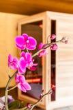 Orchidee en sauna Stock Afbeeldingen