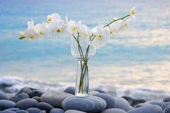 Orchidee en steen stock foto