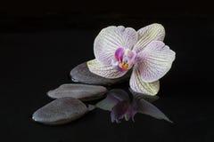 Orchidee en stenen in water met bezinning Royalty-vrije Stock Fotografie