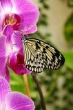 Orchidee en vlinder. royalty-vrije stock afbeeldingen