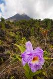 Orchidee en vulkaan royalty-vrije stock foto