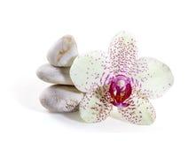 Orchidee en zen stenen Royalty-vrije Stock Foto