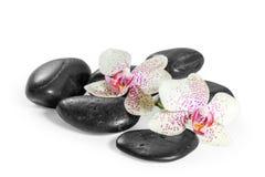Orchidee en zen stenen Royalty-vrije Stock Afbeelding