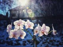 Orchidee en zonneschijn royalty-vrije stock afbeelding