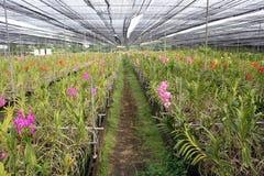 Orchidee-Garten. Lizenzfreie Stockfotografie