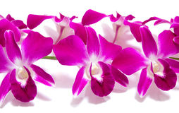 Orchidee getrennt auf Weiß Stockfotos