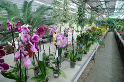 Orchidee in giardino Immagine Stock