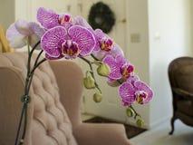 Orchidee in het huis royalty-vrije stock foto's