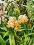 Orchidee het schilderen Royalty-vrije Stock Afbeelding