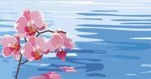 Orchidee die in het water wordt weerspiegeld Stock Afbeelding
