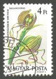 Orchidee, hircinum del Himantoglossum fotografie stock
