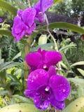 Orchidee im Garten stockfotos