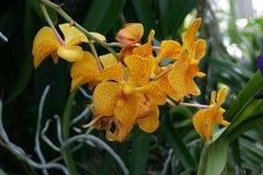 Orchidee im Sommer Stockfotografie