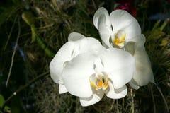 Orchidee im Sommer Stockbilder