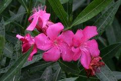 Orchidee im Sommer Lizenzfreies Stockbild