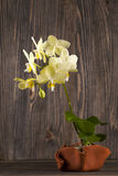 Orchidee im Tongefäß über hölzernem Hintergrund Stockbild