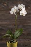 Orchidee im Tongefäß über hölzernem Hintergrund Lizenzfreies Stockbild