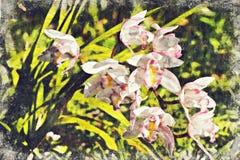 orchidee in Khunwang-chiangmai Thailand Digitaal Art Impasto O stock foto's