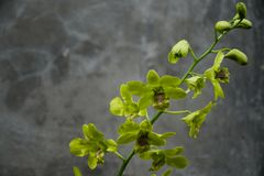 orchidee które są w kwiacie zdjęcie stock