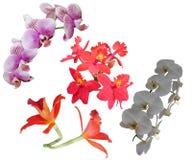 Orchidee kwitną kwiatu okwitnięcia tła natury beautifil kolor zdjęcie stock