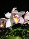 Orchidee in landbouwbedrijf Stock Foto's