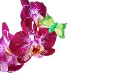 Orchidee lokalisiert auf weißem Hintergrund Lizenzfreies Stockfoto