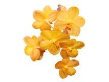 Orchidee lokalisierte Blumenorange Stockbild