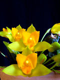 Orchidee: Lycaste cochleata Lizenzfreies Stockbild