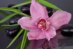 Orchidee met bamboe en zen stenen stock fotografie