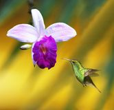 Orchidee met Kolibrie Stock Foto's