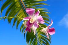Orchidee met palmbladclose-up royalty-vrije stock afbeelding