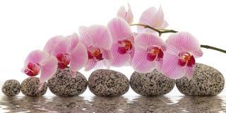 Orchidee met waterbezinning Royalty-vrije Stock Foto
