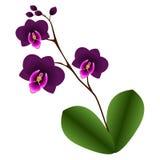 Orchidee mit Blättern Stockfotografie