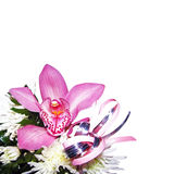 Orchidee mit Chrysanthemen stockbild
