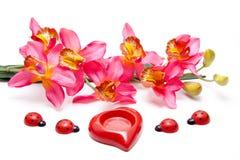 Orchidee mit Herzen und Marienkäfer Lizenzfreies Stockfoto