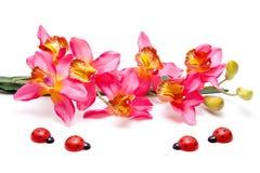 Orchidee mit Marienkäfer Stockfotos