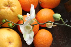 Orchidee mit Orangen Stockfoto