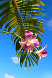 Orchidee mit Palmblattnahaufnahme Lizenzfreies Stockfoto
