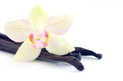 Orchidee mit Vanillebohnen Lizenzfreies Stockbild