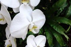 Orchidee mooie bloem in orchideetuin Royalty-vrije Stock Foto's