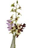 Orchidee multicolori su fondo bianco Fotografie Stock Libere da Diritti