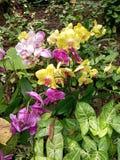orchidee?n stock afbeelding