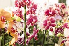 orchidee?n royalty-vrije stock foto's